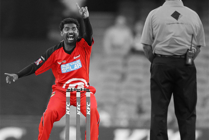 Muttiah Muralitharan in action for Melbourne Renegades - BBL 02